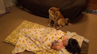 柴犬タロウと家族の日記。 風邪をひいたミイちゃんをタロウが看病します。