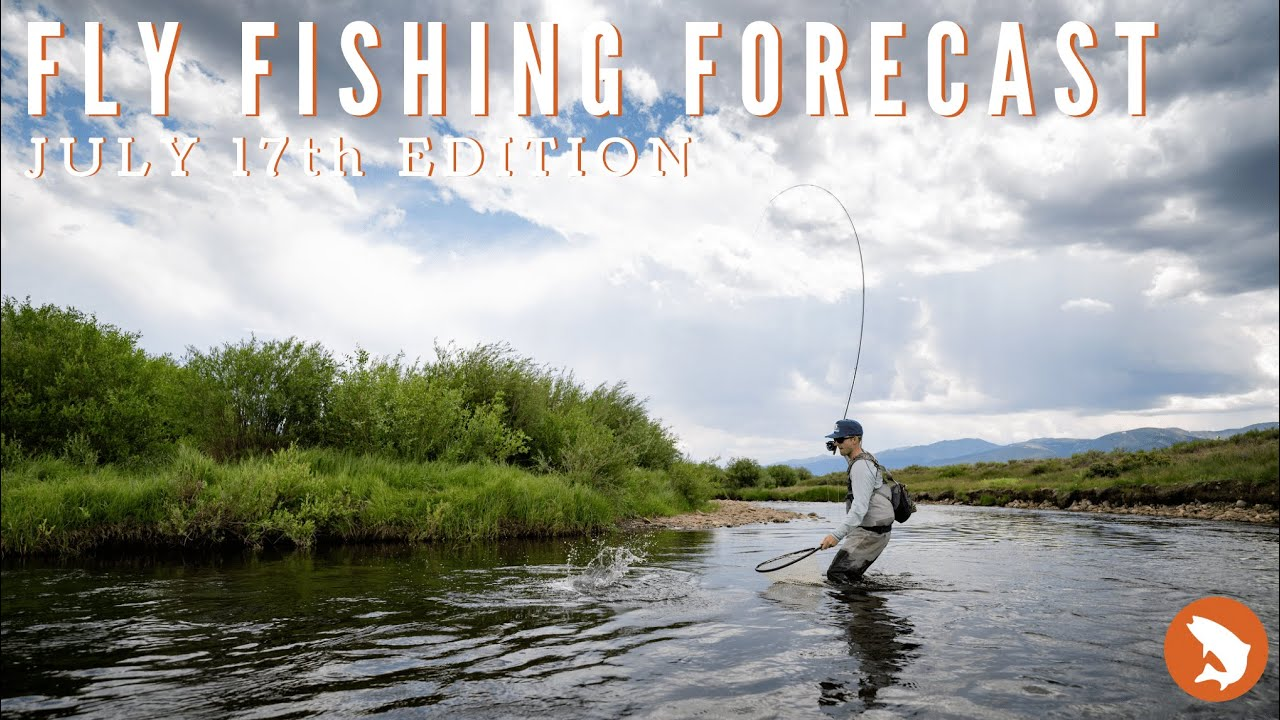 Trouts Fly Fishing Forecast || July 17th Edition
