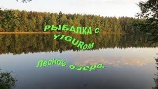 Рыбалка на лесном озере .