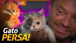 TUDO SOBRE OS GATOS PERSA! | RICHARD RASMUSSEN