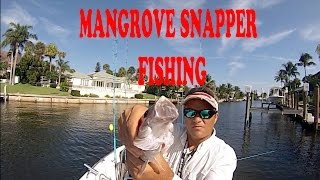 South Florida Stuart - Live Bait Fishing for Mangrove Snappers - HD # 31