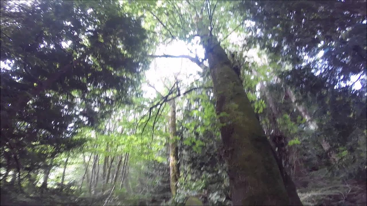 tree splits 30 foot barber chair  YouTube