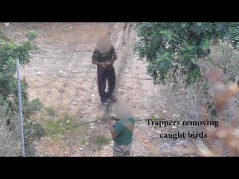 Illegal killing of birds in Republic of Cyprus