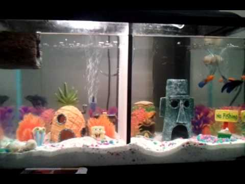 Divided 10 gallon tank youtube for Divided fish tank