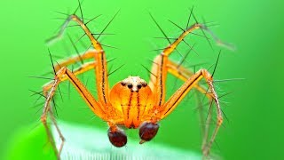 15 Cute But Most Venomous Spiders In The World