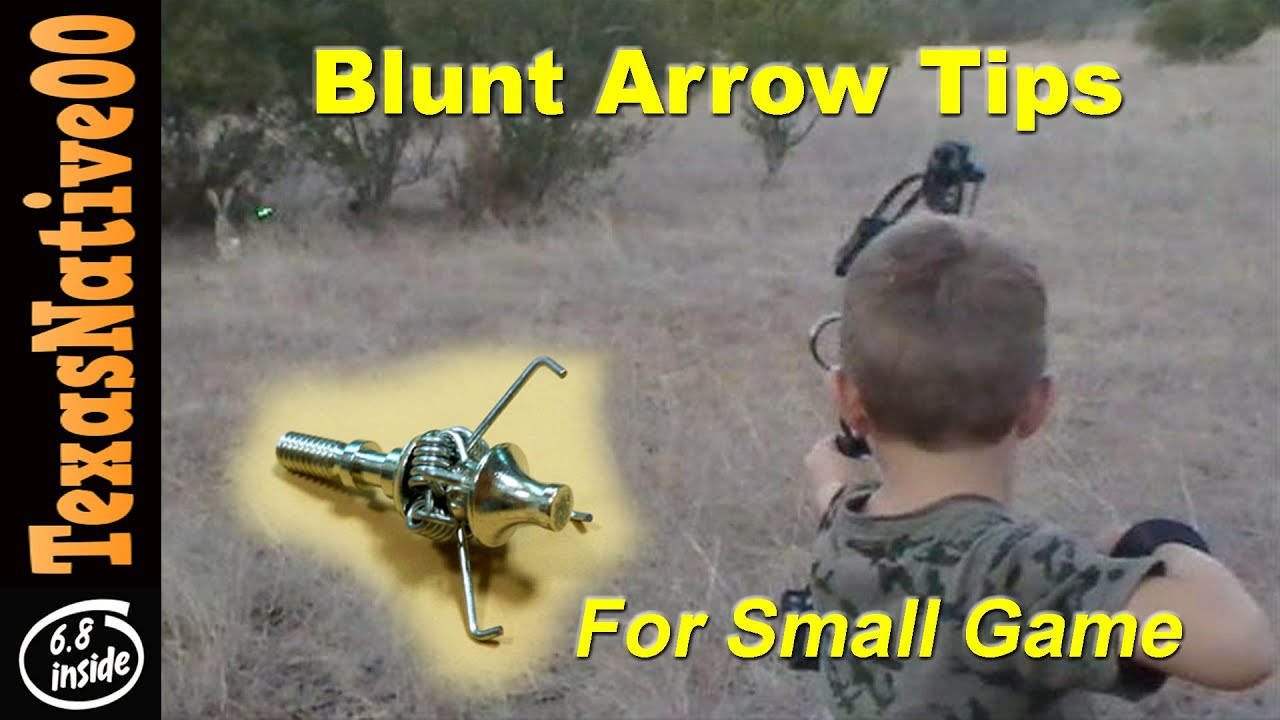 Rabbit Hunting with Blunt Arrow Tips