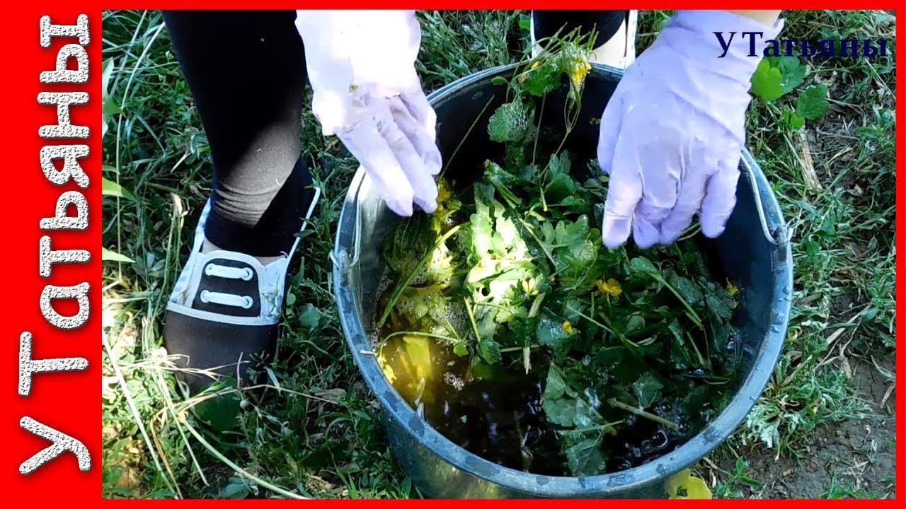 Чистотел избавит ваш сад и огород от: тли, моли, листовертки.