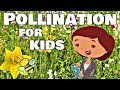 Pollination for Kids | Flower Learning Video