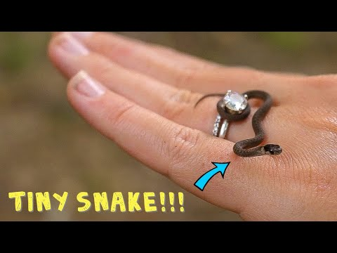 We FOUND America's SMALLEST SNAKE?!?! It's So TINY!!!!