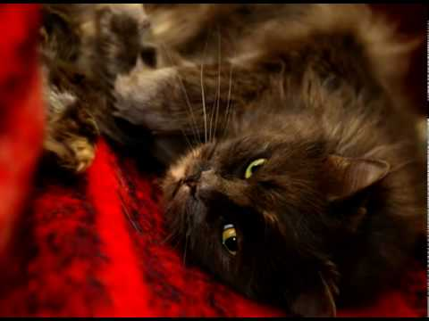 Q6 - Should I Get  A Girl or a Boy Kitten?