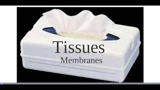 Tissues - Membranes