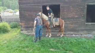Обучение коня