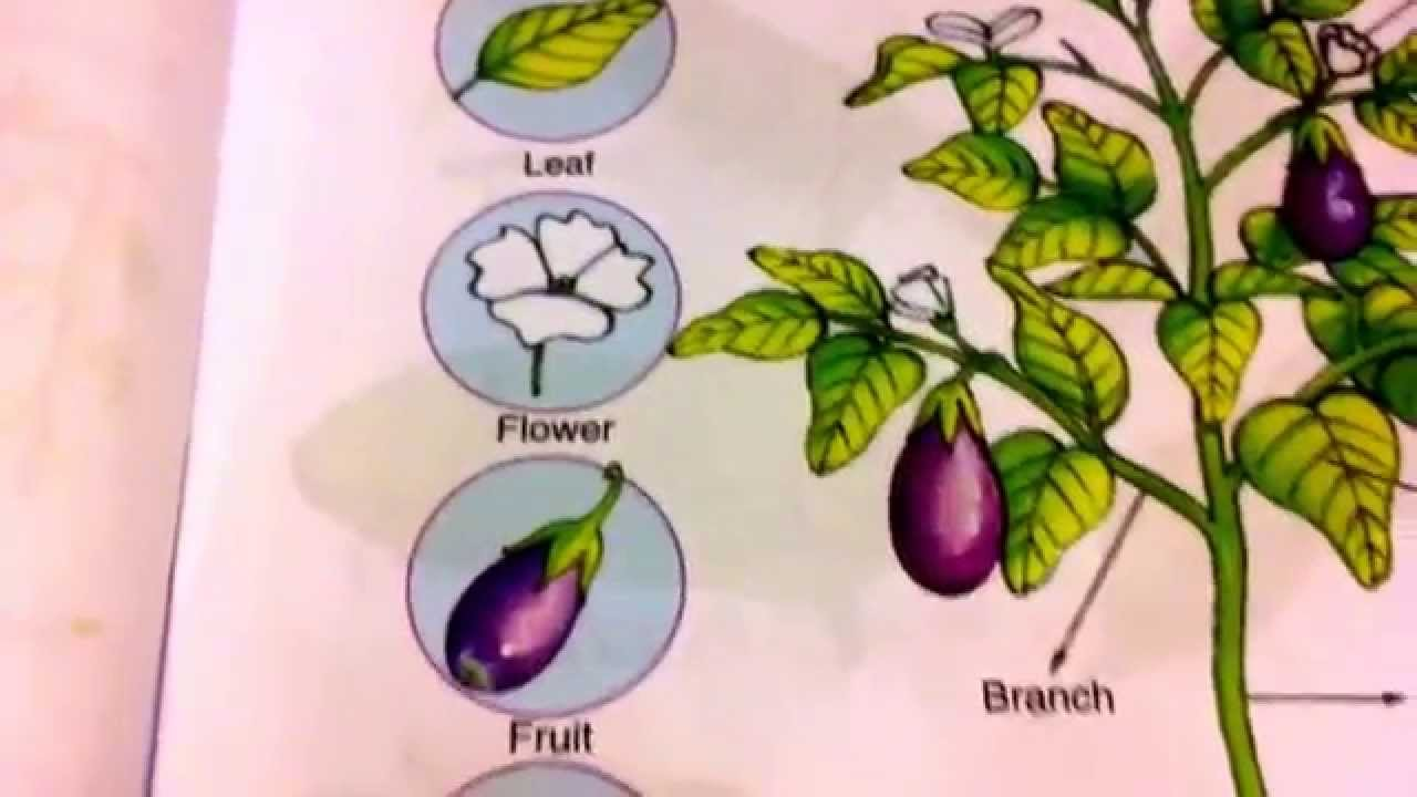 how to draw a plant with all parts