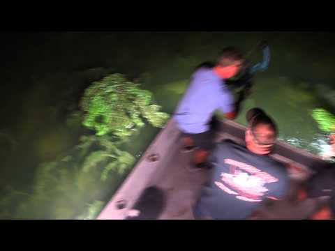 Southern Style Bowfishing Giant Gator Gar In Louisiana