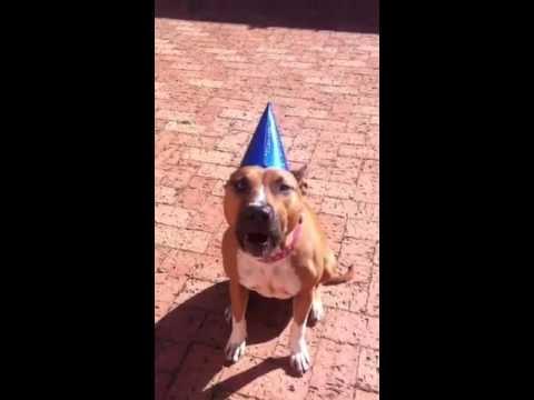 Happy Birthday Pitbull
