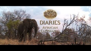 Chander Pahar Diaries  Ep 10  African Elephants Part II  Dev  Kamaleswar Mukherjee  SVF