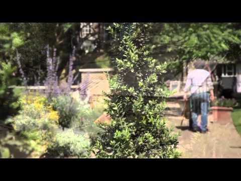 I Love London: Chelsea Physic Garden