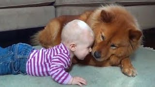CUTE DOG TRYING TO TALK TO BABY | Dog loves baby Compilation