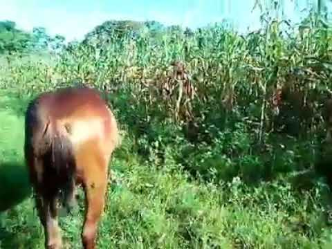 Video de San Luis