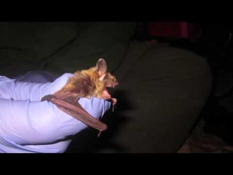 OPPD Bat Study