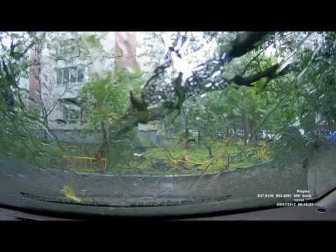 Дерево упало, все живы
