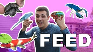 Feeding All Of My Animals on Video!!