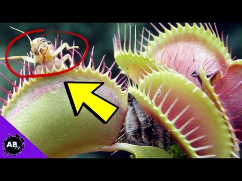 5 KILLER Plants! 5 Weird Animal Facts : Ep. 52 : AnimalBytesTV