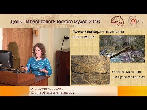 Олеся Стрельникова «Кое-что об эволюции насекомых»