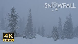 4K Snowfall - Peaceful Snowing - Snowy Trees - Relaxing Winter Video - Ultra HD - 2160p