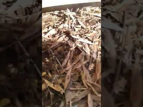 קרפדות בגן ילדים בשכונת עמישב פתח תקוה