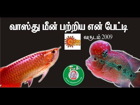 Vasthu Fish ( Flower Horn & Arowana) - My Speech In Sun News  2009