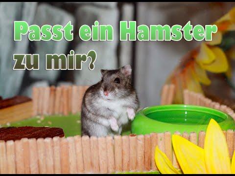 Passt ein Hamster zu mir?
