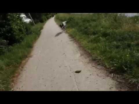 """""""Free Fall"""" de Stephan Lacant : La réponse allemande au """"Secret de Brokeback Mountain""""de YouTube · Durée:  1 minutes 23 secondes"""