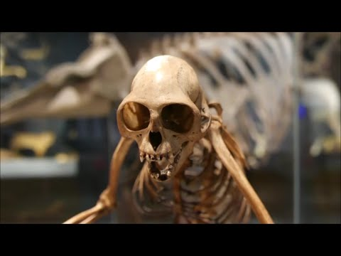 Explore the new Lee Kong Chian Natural History Museum [4K Video]
