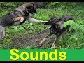 Cat Fight SOUNDS and PICTURES    Cat pictures and cat sounds,
