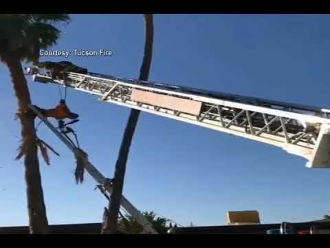 Tucson Firefighters rescue palm tree worker