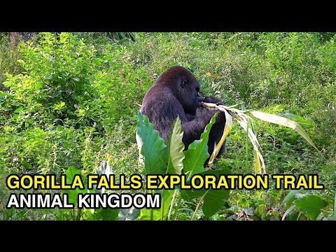 [4K] Gorilla Falls Exploration Trail - African Animal Trek : Animal Kingdom (Orlando, FL)