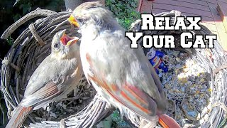 Relax Your Pet | Relaxing Bird Feeder Videos For Cats | Entertainment For Them While You're Away