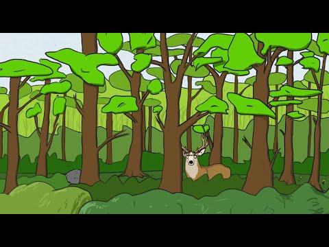 Intro to Forestry Economics