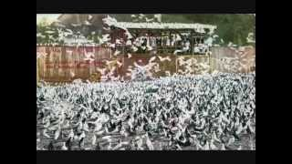 Largest Pigeon Farm In The World /  WWW.PigeonBreed.Com