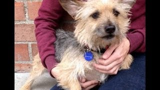Toto Needs A Home! Cagefree K9 Camp Rescue