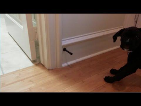 Cute boxador puppy vs the door stopper youtube - Cute door stoppers ...