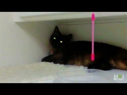 Precious Ain't So Precious | My Cat From Hell