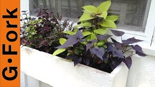 Planting a Window Flower Box - GardenFork