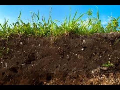 Cómo Utilizar Materia Orgánica Compostada en Suelos Agrícolas - TvAgro por Juan Gonzalo Angel