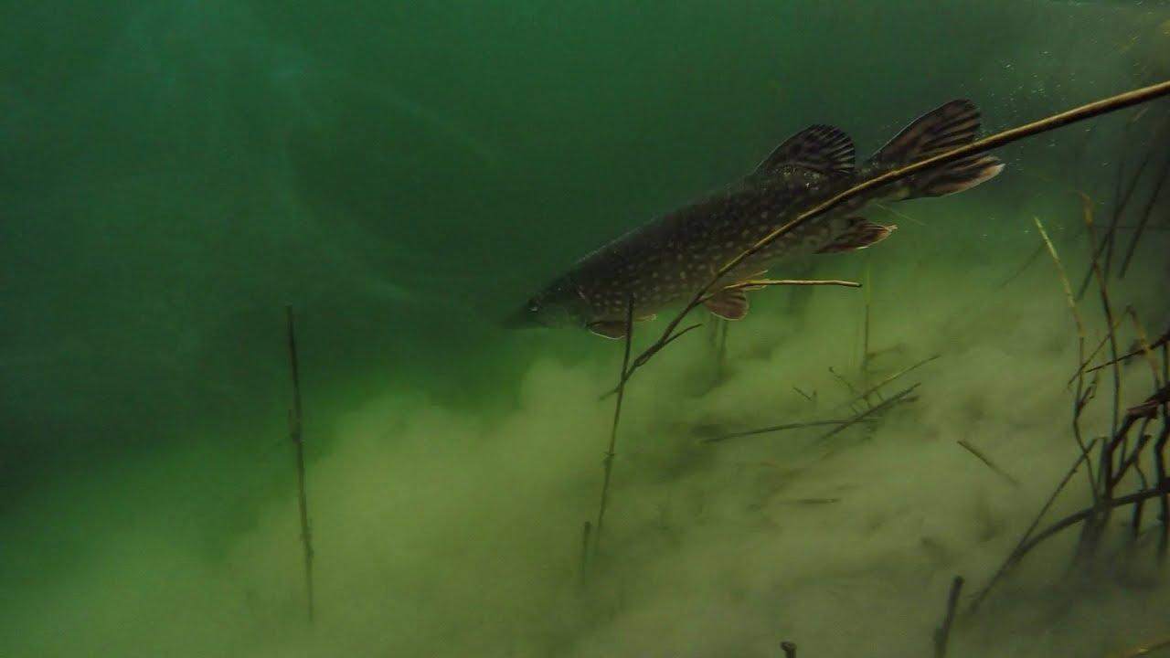 Ultralight spinning for lake pike january 2016 uk fishing for Ultralight fly fishing