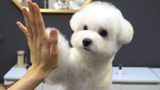 이-손이-그-유명한-마법손