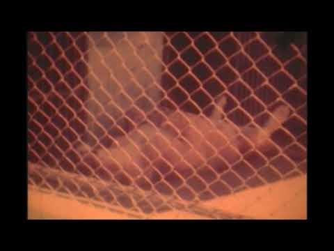 Familia 13 Zoo Quinzinho de Barros em Sorocaba 1975 1976