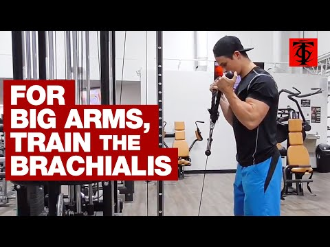 Increase Arm Size: Train the Brachialis