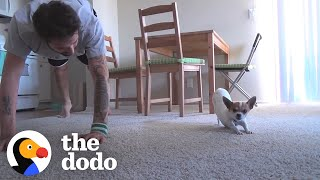 Dog Copies Every Single Yoga Pose His Dad Does   The Dodo